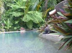 Daintree Rainforest Retreat Motel Logo and Images