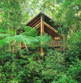 The Canopy Rainforest Tree Houses and Wildlife Sanctuary Logo and Images