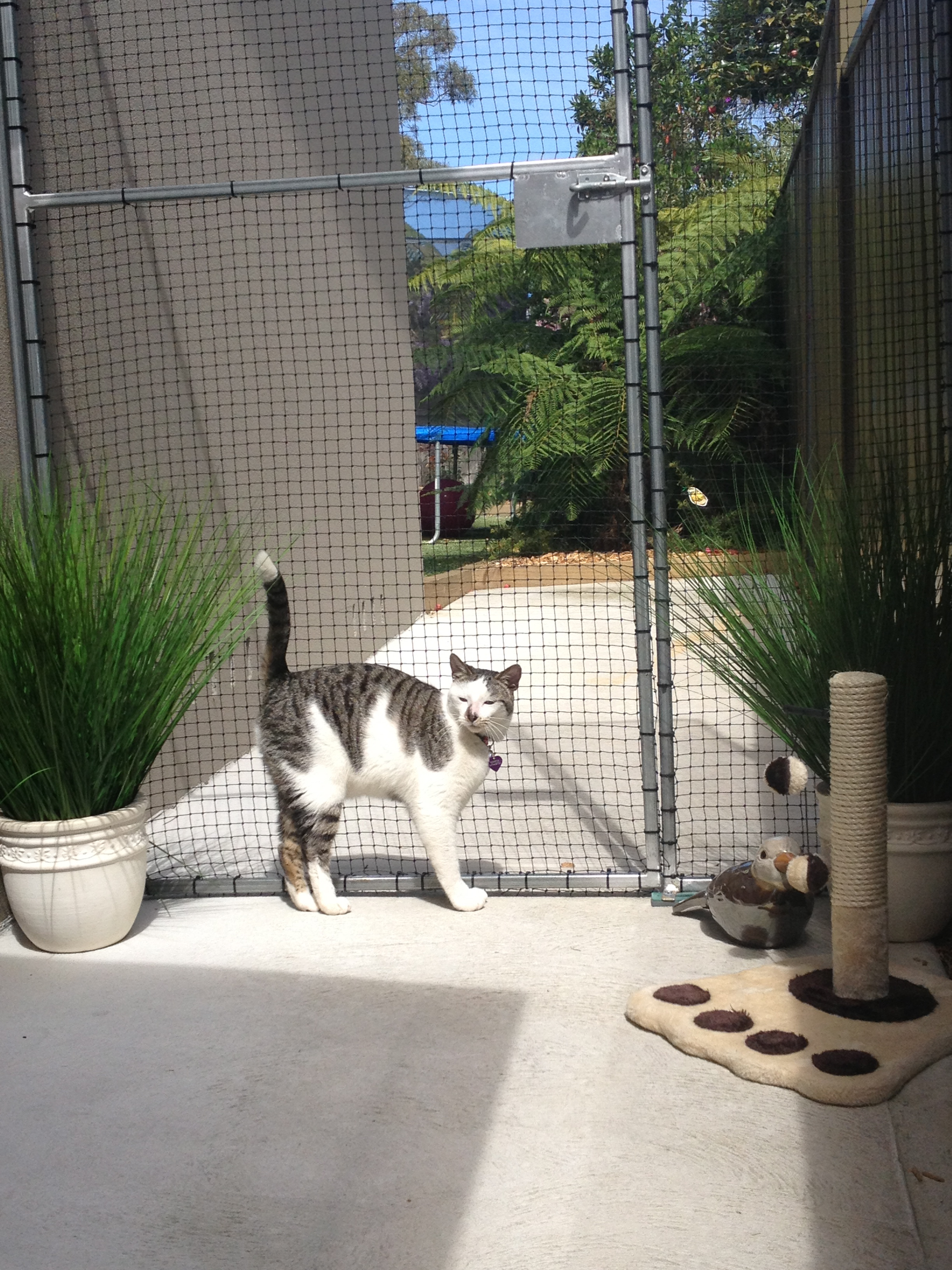 Caringbah Cat Hotel Logo and Images