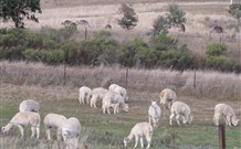Glendalough Alpacas Bed and Breakfast Logo and Images