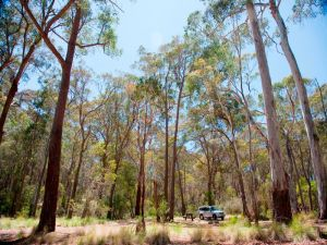 Coolah Tops National Park Camping Logo and Images