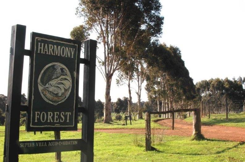Harmony Forest Image