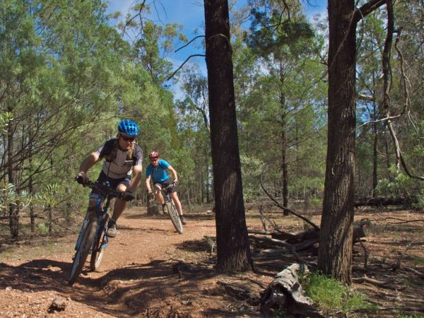 Back Yamma State Forest Logo and Images