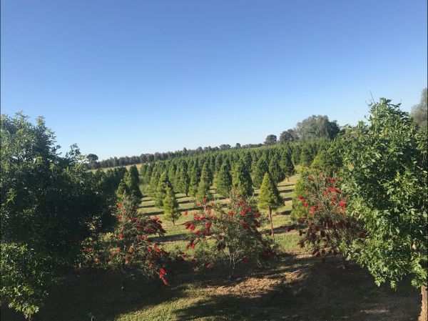 Rutherglen Christmas Trees Farm Stay Image