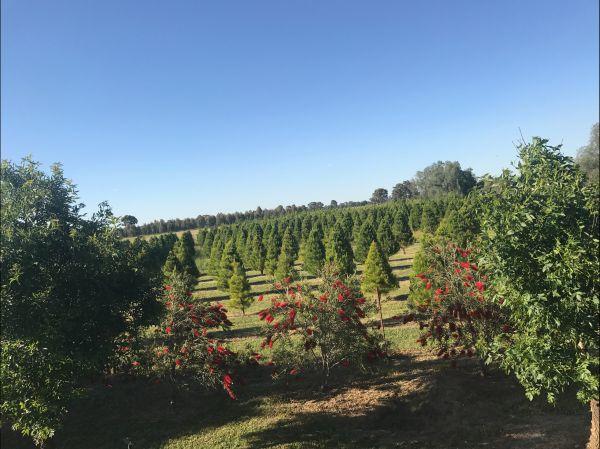 Rutherglen Christmas Trees Farm Stay Image