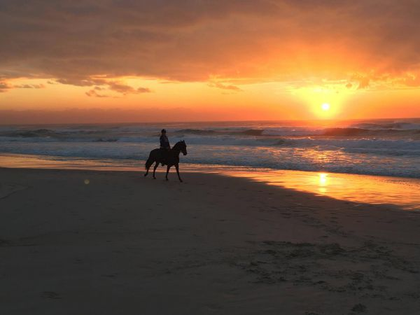 Tassiriki Ranch Beach Horse Riding and Holiday Cabins Image