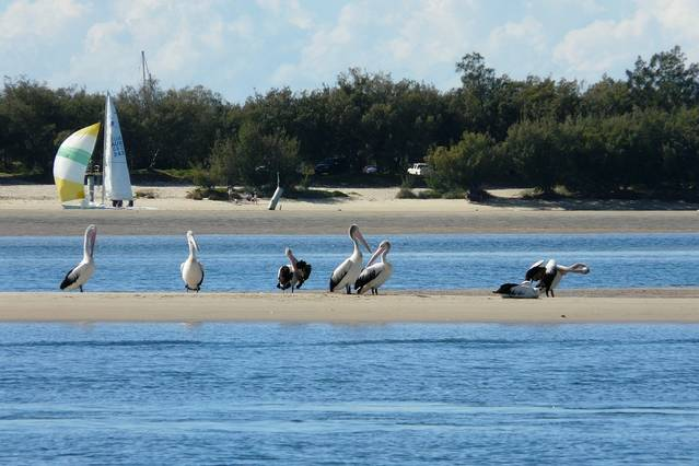 Sandcastles on the Broadwater