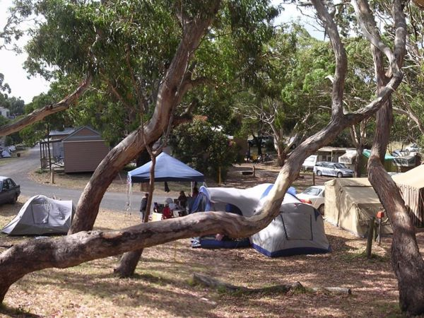 Bimbi Park Camping Under Koalas Logo and Images