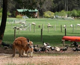 Diamond Forest Cottages and Farm Stay