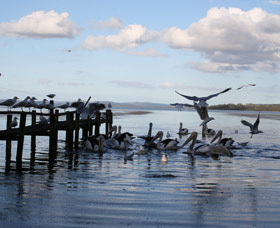Pelicans At Denmark - Holiday Home Image