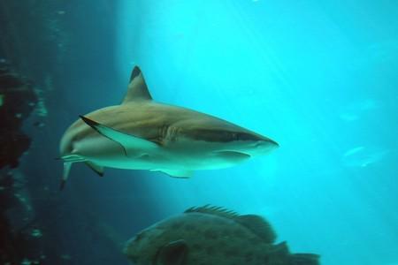 Reef HQ Great Barrier Reef Aquarium