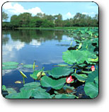 Kakadu National Park Logo and Images