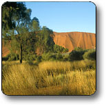 Uluru - Kata Tjuta National Park Image