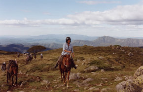 High Country Horses Image