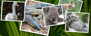 Rockhampton Zoo Logo and Images