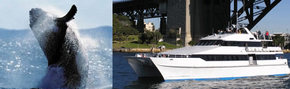 Prestige Harbour Cruises Logo and Images