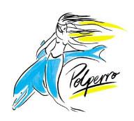 Polperro Dolphin Swims Image
