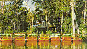 Daintree Rainforest River Trains Logo and Images