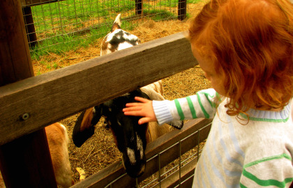 Collingwood Children's Farm Image