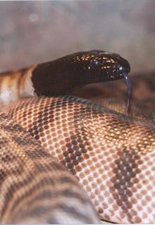 Armadale Reptile & Wildlife Centre