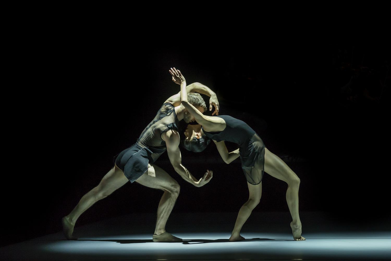 Sydney Dance Company Image