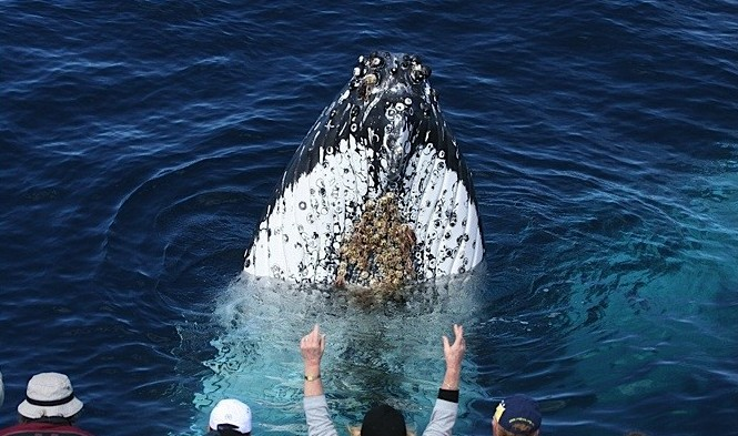 Spirit of Gold Coast Whale Watching Image