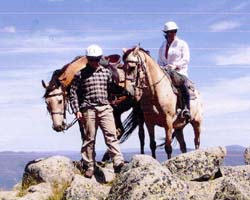High Country Horses Logo and Images