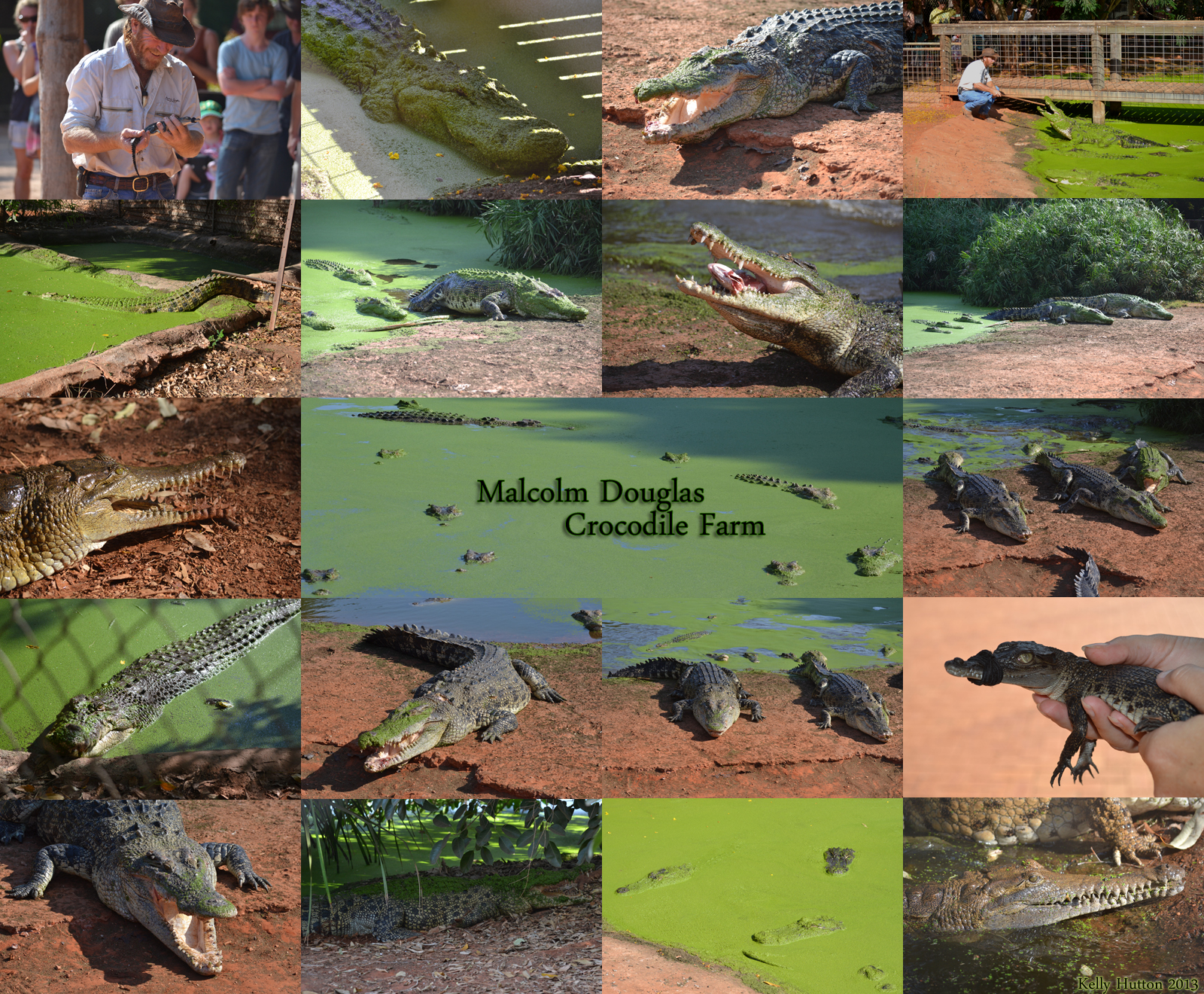 The Malcolm Douglas Crocodile Park Image