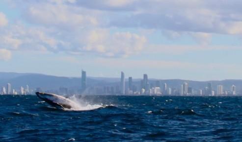 Australian Whale Watching