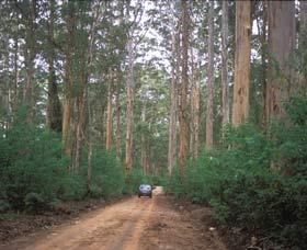 Boranup Drive