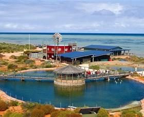 Ocean Park Aquarium Logo and Images