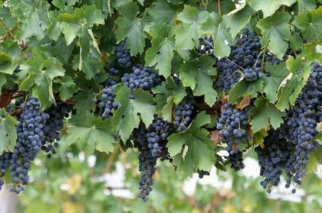 Capel Vale Wines Image