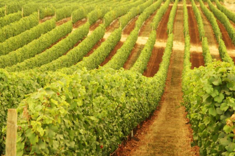 Xanadu Wines Image