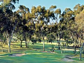 Tanunda Pines Golf Club Logo and Images
