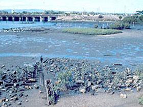 Jervois Basin Ships' Graveyard Image