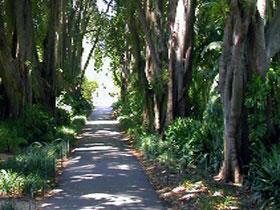 Adelaide Botanic Garden Image