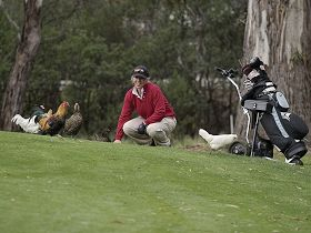 Tasmania Golf Club - The Logo and Images