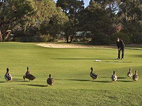 Royal Hobart Golf Club Logo and Images