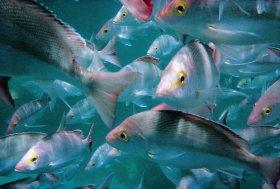 Palm Beach Reef Dive Site