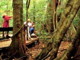 Mary Cairncross Scenic Reserve Logo and Images