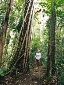 Wet Tropics Logo and Images