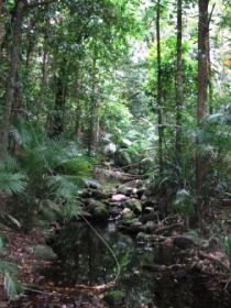 Mossman Gorge Rainforest Circuit Track, Daintree National Park Logo and Images