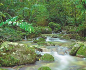 Mossman Gorge, Daintree National Park Logo and Images