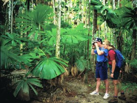 Mount Sorrow Ridge Trail, Daintree National Park Logo and Images
