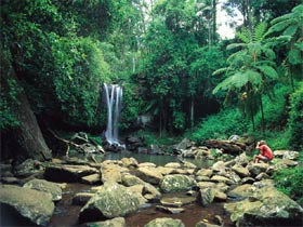 Tamborine National Park Logo and Images