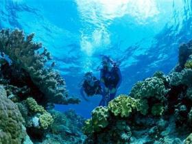 Coral Gardens Dive Site Image