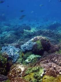 Hoffman's Rocks Dive Site Image