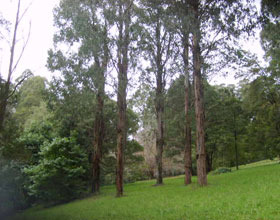 Mount Dandenong Arboretum Logo and Images