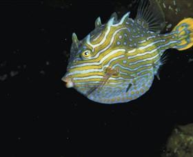 Mushroom Reef Marine Sanctuary Logo and Images