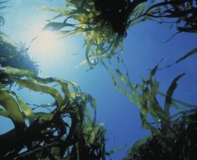 Marengo Reefs Marine Sanctuary Logo and Images